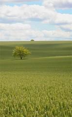 pl_plaine_arbre.jpg