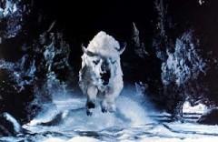 Bison blanc.jpg
