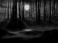 foret-nocturne-01.jpg